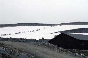 Sommerskifahren oder Gletscherwanderung