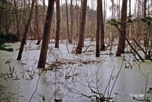 Sumpfgebiet in Masuren 1