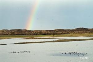 im Naturreservat bei Oye Plage