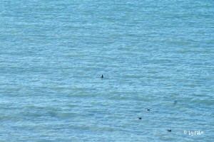 Robben im Ärmelkanal 2
