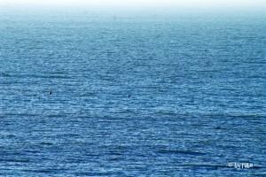 Robben im Ärmelkanal 1