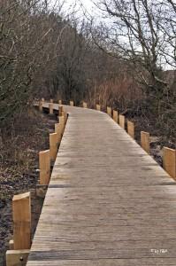 Holzsteg im Hinterland bei Ambleteuse
