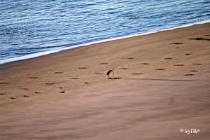 Ausgrabungen am Strand 1