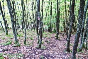 naturnahe Waldwege statt Forst- und Wirtschaftswege