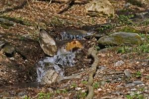 Bach am Wassererlebnispfad Hahnenbachtal